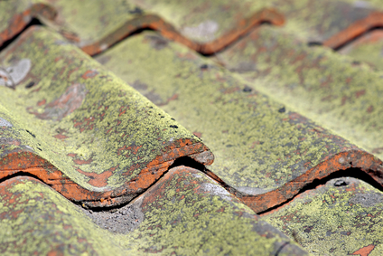 Close up of tiled roof with fungus